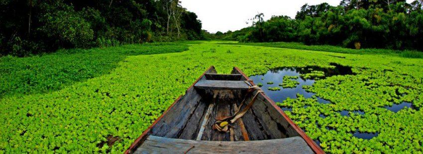 40 DIAS DE REFLEXION HACIA EL SINODO DE LA AMAZONIA